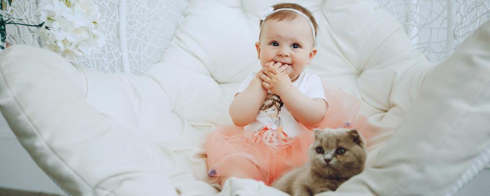 Bebês e pets - O guia definitivo